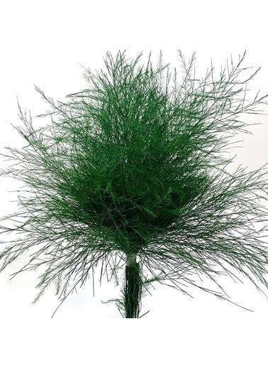 Çiçek Antalya Çiçek Antalya Asparagus Virgatus Vazoluk Lik 1 Demet 10 Dal 70 Cm Yeşil